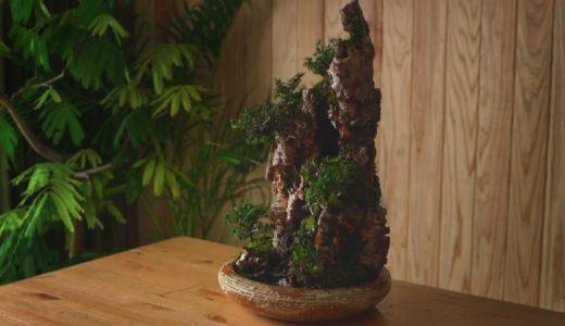 『植物男子 Asu』の作る「水の流れる盆景」が美しすぎると話題に