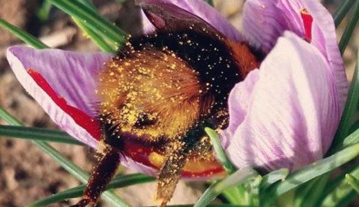 眠るマルハナバチが可愛すぎる