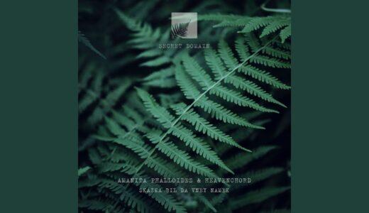 Heavenchord、自然をテーマにした新作アンビエントEP「SKAZKA BIL DA VNEY NAMEK 」リリース
