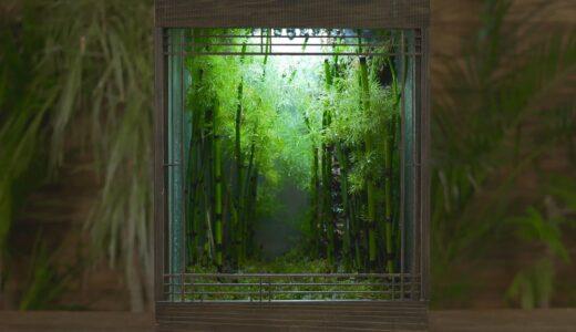 植物男子 Asu の作るミニチュアの竹林『雨の庭』がマジで美しい