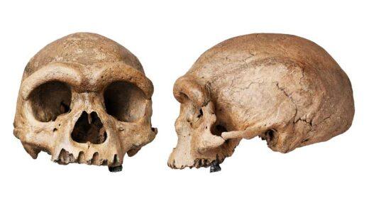 ネアンデルタール人よりも現生人類に近い『竜人』の化石が発見|論文発表