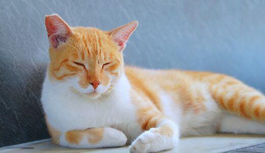猫をトランス状態にいざなう「猫ケツドラマー」現る